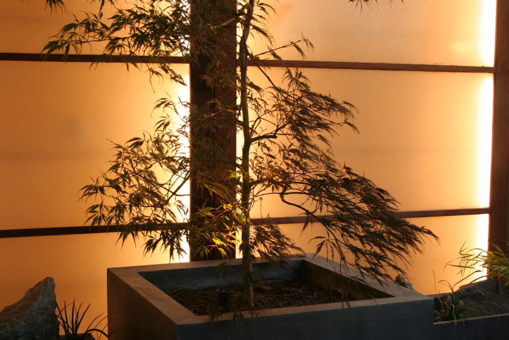 Backlit plantings