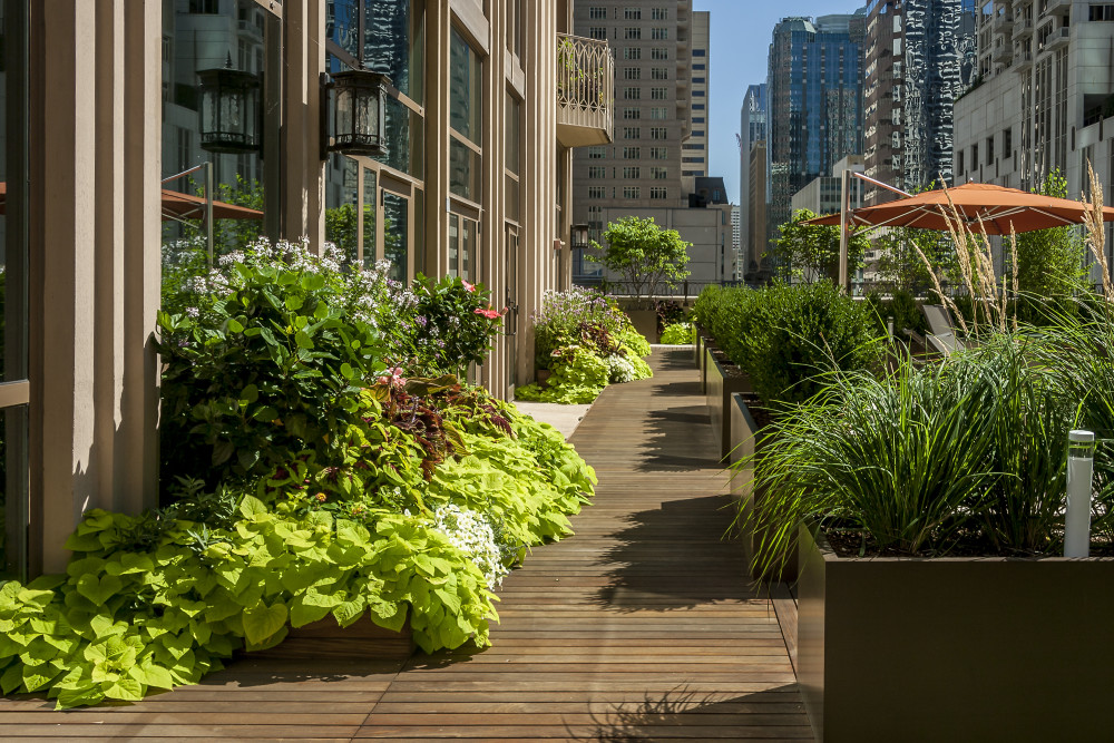 The sunny roof terrace is a perfect setting  for rambunctious, fast-growing flowering annuals and vines.