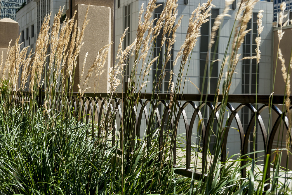 These native grasses have a wonderful upright form which works well on breezy, sunny city terraces.